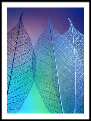 Buy this art print titled Prismatic Leafs by the artist Shihya Kowatari