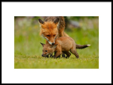 Art print titled Protective Mom by the artist Assaf Gavra