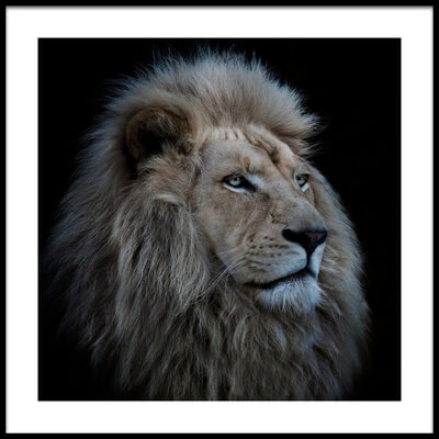 Art print titled Proud Lion by the artist Louise Wolbers