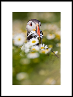 Art print titled Puffin Amp Daisies by the artist Mario Suárez