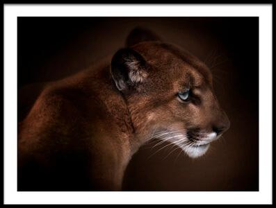 Art print titled Puma by the artist Doris Reindl