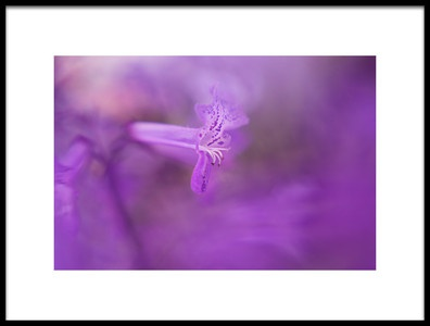 Art print titled Purple Haze by the artist Oranit Turgeman