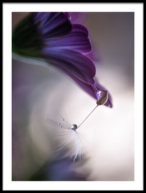 Art print titled Purple Rain by the artist Silvia Spedicato