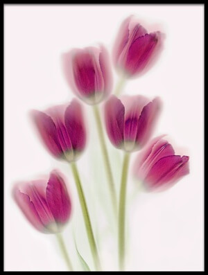 Art print titled Purple Tulips by the artist Brian Haslam