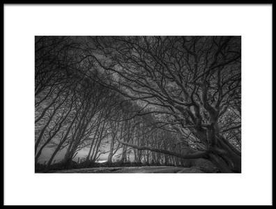 Buy this art print titled Quantock Avenue of Trees by the artist David Leyland