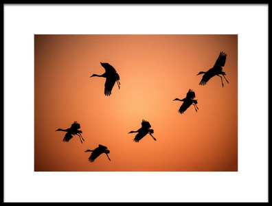 Art print titled Ready to Land by the artist  Hao Jiang