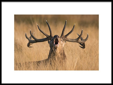 Art print titled Ready to Rut by the artist Kutub Uddin