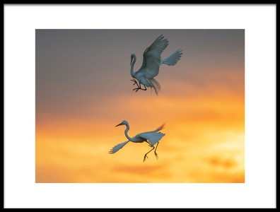 Buy this art print titled Reborn In the Rising Sun by the artist Aijing H.