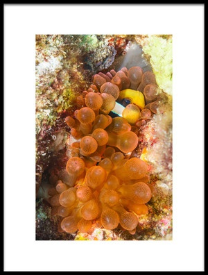 Art print titled Red Anemone by the artist Roberto Marchegiani