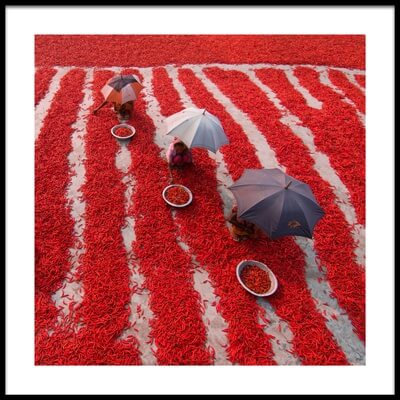 Buy this art print titled Red Chili Pickers by the artist Azim Khan Ronnie