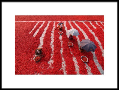 Buy this art print titled Red Chilies Pickers by the artist Azim Khan Ronnie