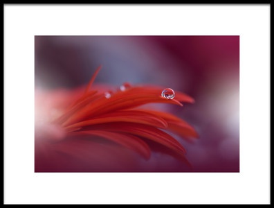 Art print titled Red Passion by the artist Juliana Nan