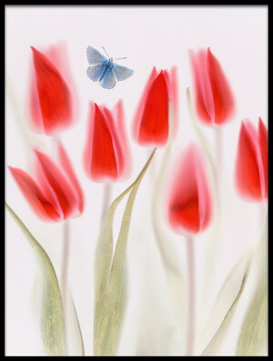 Art print titled Red Tulips by the artist Brian Haslam