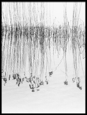 Art print titled Reed by the artist Pia Mihailowitsch