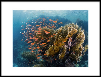 Art print titled Reefscape by the artist Ilan Ben Tov