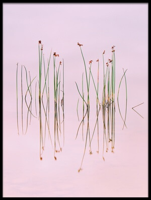 Buy this art print titled Reflection of Serenity by the artist Yan Zhang