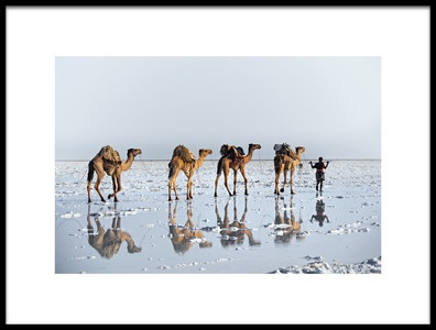 Art print titled Reflections of an Ancient Life by the artist Trevor Cole