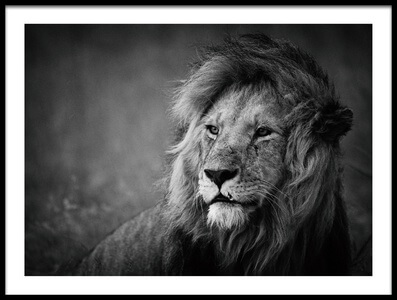 Buy this art print titled Regal by the artist Mohammed Alnaser