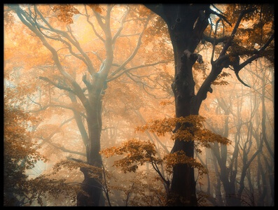 Art print titled Reverse and Forward by the artist Ildiko Neer
