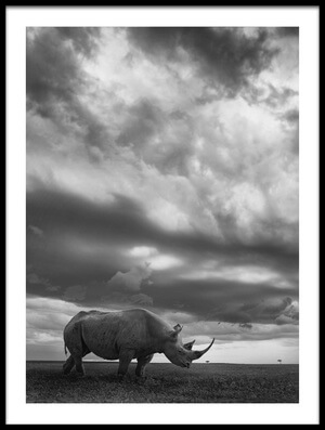 Buy this art print titled Rhino Land by the artist Mario Moreno