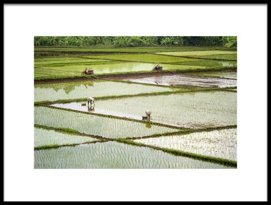Art print titled Rice Fields by the artist Burak Senbak