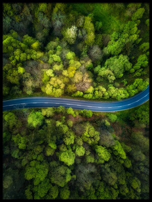 Buy this art print titled Road In the Forest by the artist Alfonso maseda varela