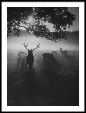 Buy this art print titled Robin Hood Woods by the artist Robert Fabrowski