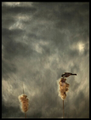 Art print titled Roost by the artist David Senechal Photographie (polydactyle)
