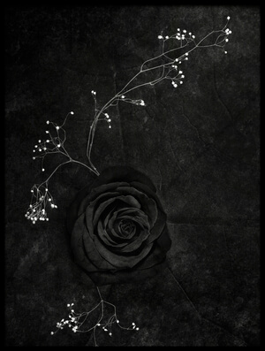 Buy this art print titled Rose Noire by the artist Stephen Clough