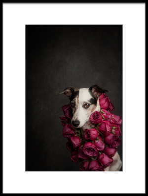 Buy this art print titled Rose Queen II by the artist Heike Willers
