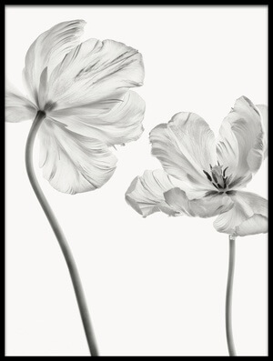 Art print titled Same Tulip : Front- and Backview by the artist Lotte Grønkjær