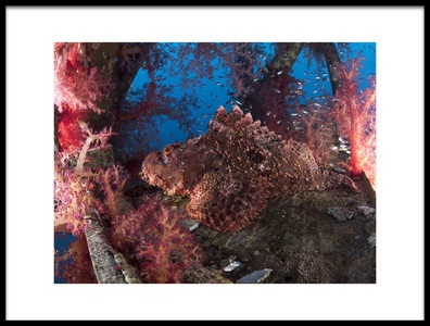 Art print titled Scorpionfish by the artist Ilan Ben Tov
