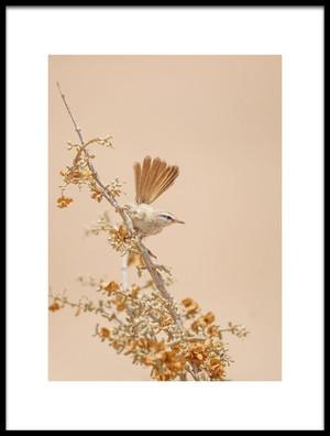 Buy this art print titled Scrub Warbler by the artist Shlomo Waldmann