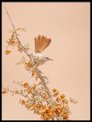 Art print titled Scrub Warbler by the artist Shlomo Waldmann