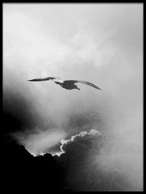 Buy this art print titled Seagull by the artist Daniela Riegler