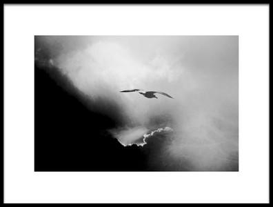 Art print titled Seagull by the artist Daniela Riegler