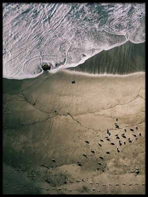 Buy this art print titled Seagulls and Surf II by the artist Robert Work