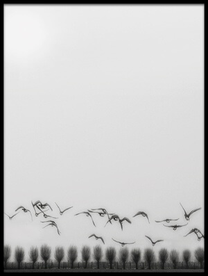 Buy this art print titled Seagulls Over the Fields by the artist Yvette Depaepe