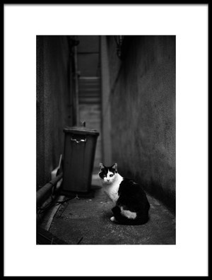 Buy this art print titled Secret Alley by the artist tomorca