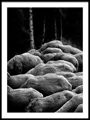 Buy this art print titled Sheep by the artist Novica Stankovic