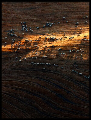 Buy this art print titled Sheep Hill II by the artist Massimo Della Latta