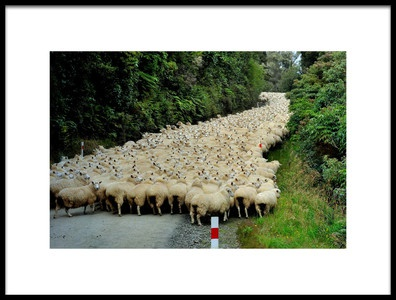 Buy this art print titled Sheep River by the artist Yair Tzur
