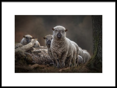 Art print titled Sheeps by the artist Peter Wagner
