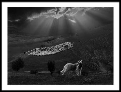 Art print titled Sheperd Dog by the artist Clas Gustafson EFIAP