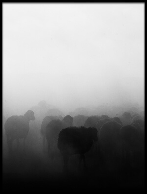 Buy this art print titled Shepherd Herd by the artist feyzullah tunc