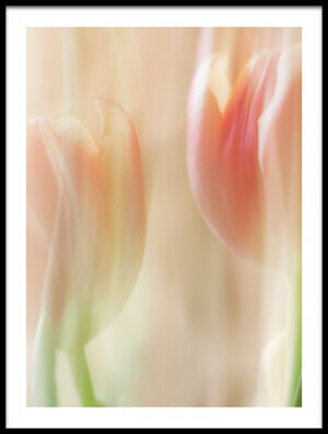 Art print titled Shy Tulips by the artist Heidi Westum