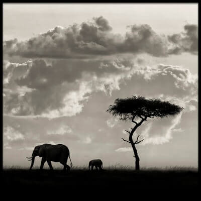 Art print titled Silhouettes of Mara by the artist Mario Moreno