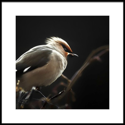 Art print titled Silk Tail by the artist Benny Pettersson