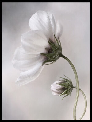 Buy this art print titled Simply Cosmos by the artist Mandy Disher