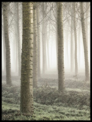 Buy this art print titled Small Woodland by the artist Fiorenzo Carozzi